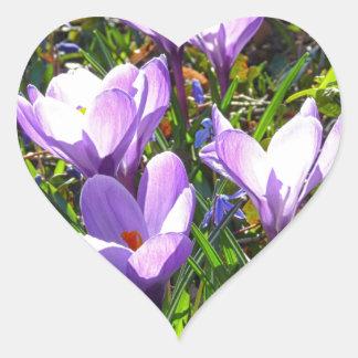 Violet crocuses 02.0, spring greetings heart sticker