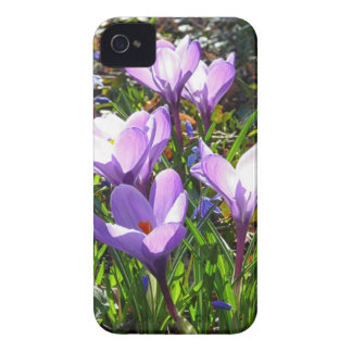 Violet crocuses 02.0, spring greetings iPhone 4 Case-Mate case