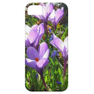 Violet crocuses 02.0, spring greetings iPhone 5 cover
