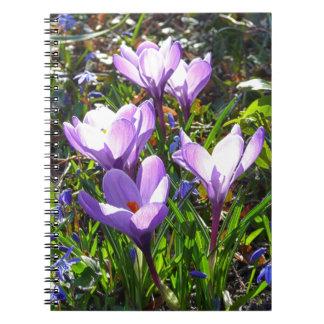 Violet crocuses 02.0, spring greetings notebook