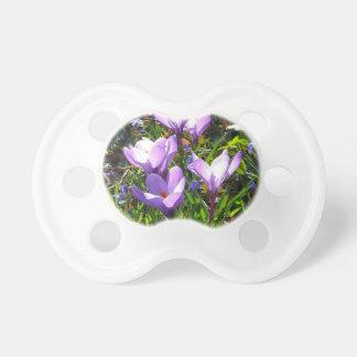 Violet crocuses 02.0, spring greetings pacifier
