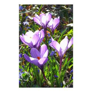 Violet crocuses 02.0, spring greetings stationery