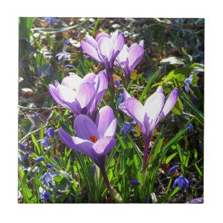 Violet crocuses 02.0, spring greetings tile