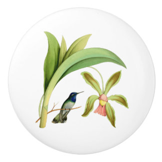 Violet Headed Hummingbird Vintage Illustration Ceramic Knob