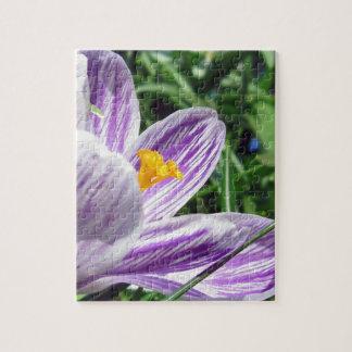 Violet jump Crocus Puzzle