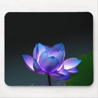 Violet Lotus in full bloom, mousepad