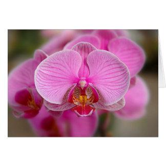 Violet Orchids Card