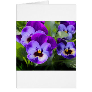 violet pansy card