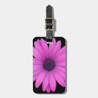 Violet Pink Osteospermum Flower Isolated on Black Luggage Tag