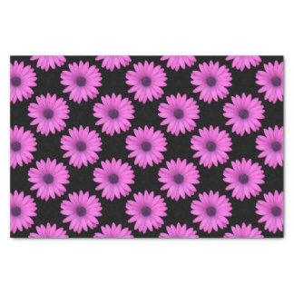 Violet Pink Osteospermum Flower Isolated on Black Tissue Paper
