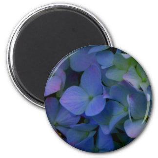 Violet purple hydrangeas magnet