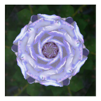 Violet Rose Acrylic Wall Art
