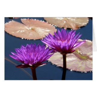 Violet Water Lilies Card
