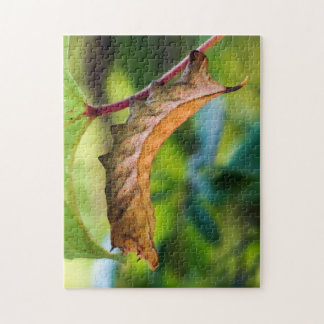 Virginia Creeper Sphinx Caterpillar Puzzle