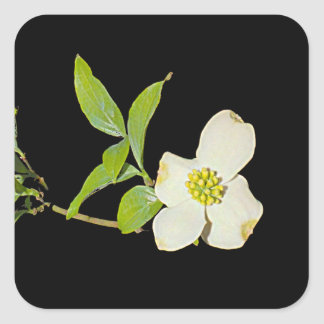 Virginia Dogwood Square Sticker