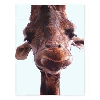 Visage drôle de girafe carte postale