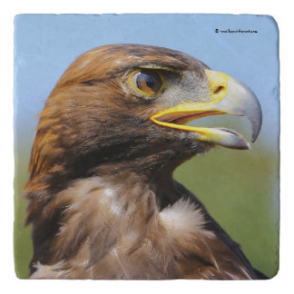 Vision of a Beautiful Young Golden Eagle Trivet