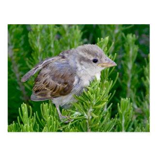 Visiting Birdie Post Card