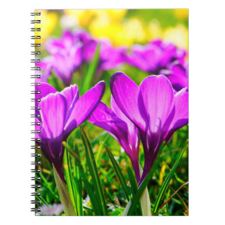 Vivacious Willing Wonderful Imagine Notebooks