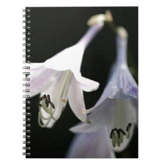 vivian-chu notebook