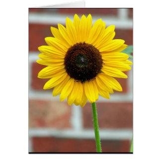 Vivian's Sunflower Card
