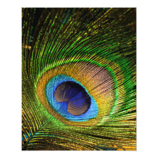 Vivid Feather Photo Print