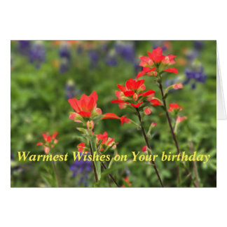 Vivid Indian Paintbrush Card