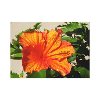 Vivid Orange Flower Canvas Print