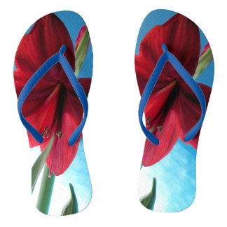 Vivid red Amaryllis flower against a blue wall Flip Flops