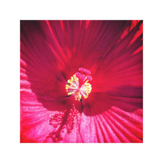Vivid Red Flower Canvas Print