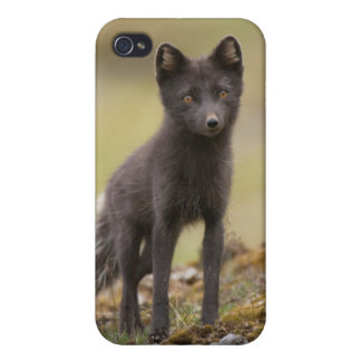 Vixen searches for food iPhone 4 case
