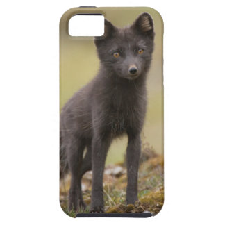 Vixen searches for food iPhone 5 case