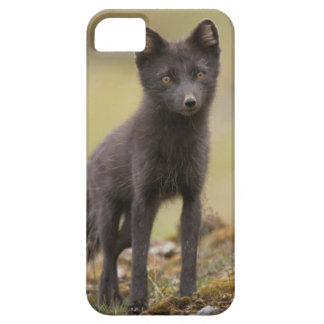 Vixen searches for food iPhone 5 cover