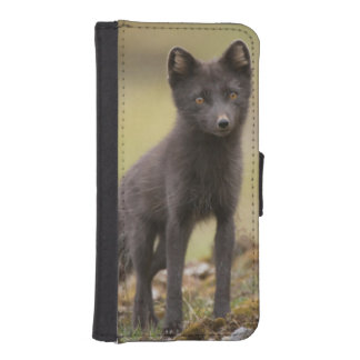 Vixen searches for food iPhone 5 wallet case