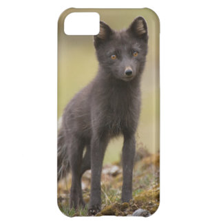 Vixen searches for food iPhone 5C cover