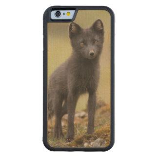 Vixen searches for food maple iPhone 6 bumper case
