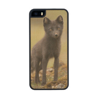 Vixen searches for food carved® maple iPhone 5 case