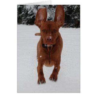 Vizsla - Big ears Greeting Card