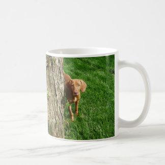 Vizsla Cup