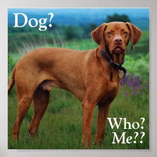 Vizsla - Dog?, Who?, Me?? Poster