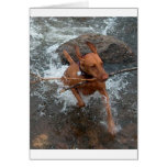 Vizsla_fetching in water.png cards