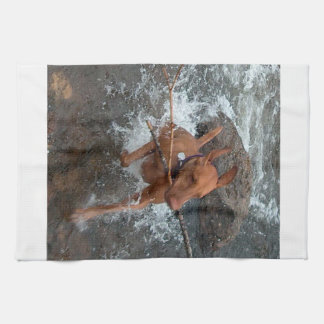 Vizsla_fetching in water.png hand towel
