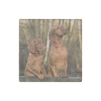 vizsla group stone magnets