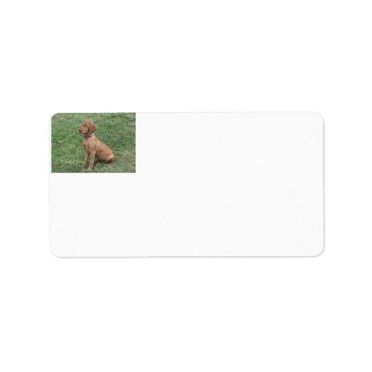 Vizsla Puppy Address Labels