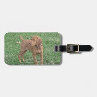 Vizsla Puppy Bag Tag