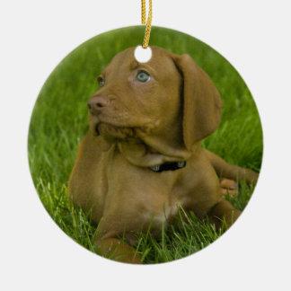 Vizsla puppy Ornament