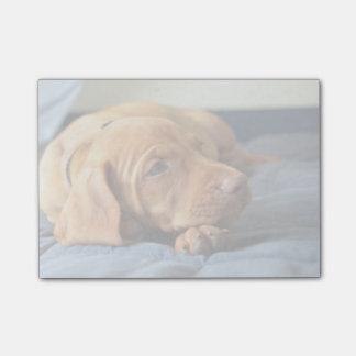 Vizsla Puppy Resting On Its Paw Post-it Notes