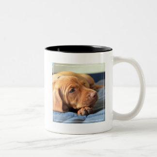 Vizsla Puppy Resting On Its Paw Two-Tone Coffee Mug