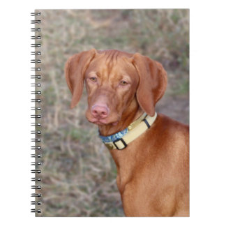 Vizsla Spiral Notebooks