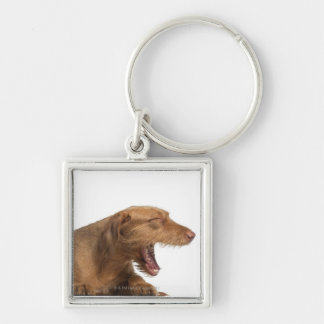 Vizsla yawning in front of white back ground keychain